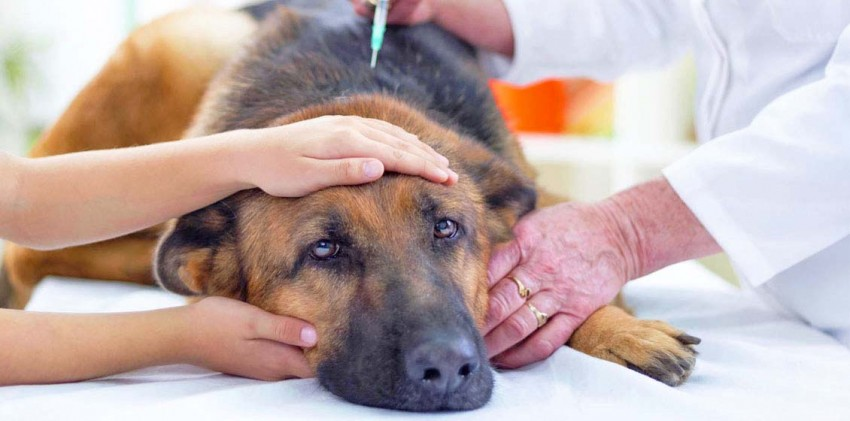 Особенности эвтаназии домашних животных 2