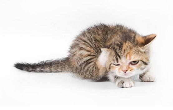 Дерматология домашних животных